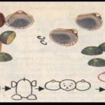 Чебурашка (схема поделки)