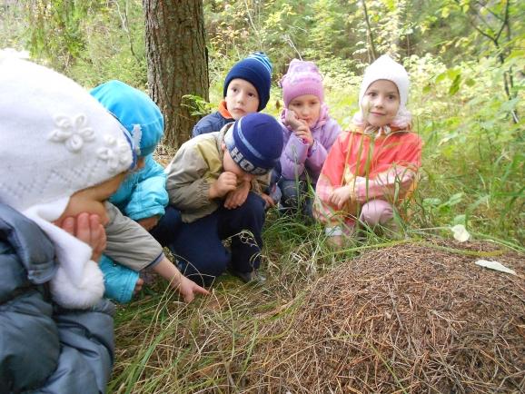 Дети рассматривают муравейник