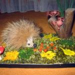 Ёжик из куска меха в окружении веток, ягод и листьев