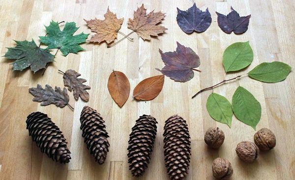 Материалы для работы (листья, шишки, орехи)