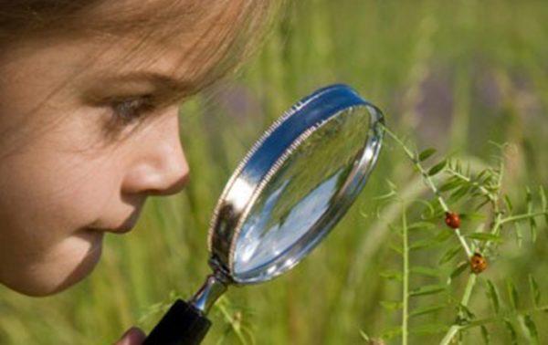 Ребёнок наблюдает за жуками