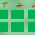 Игровое поле «Живая природа» для игры «Живое, неживое, рукотворное»