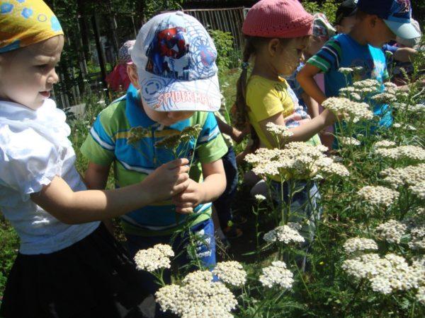 Дети на полянках рассматривают белые зонтичные цветочки