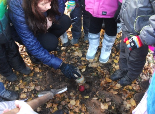 Дети с воспитательницей закапывают в землю яблоки