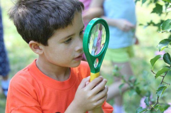 Мальчик в оранжевой футболке смотрит на листву через лупу