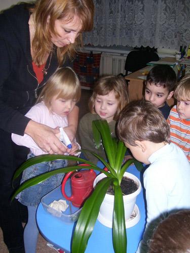 Дети средней группы вместе протирают листья растения