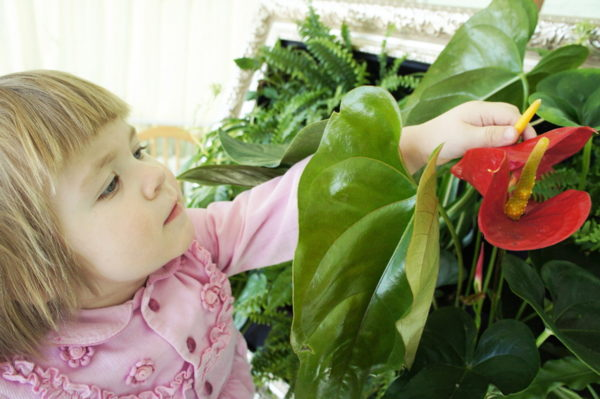 Девочка рассматривает комнатное растение