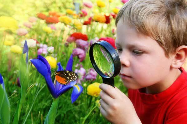 Мальчик через лупу рассматривает яркую бабочку на цветке