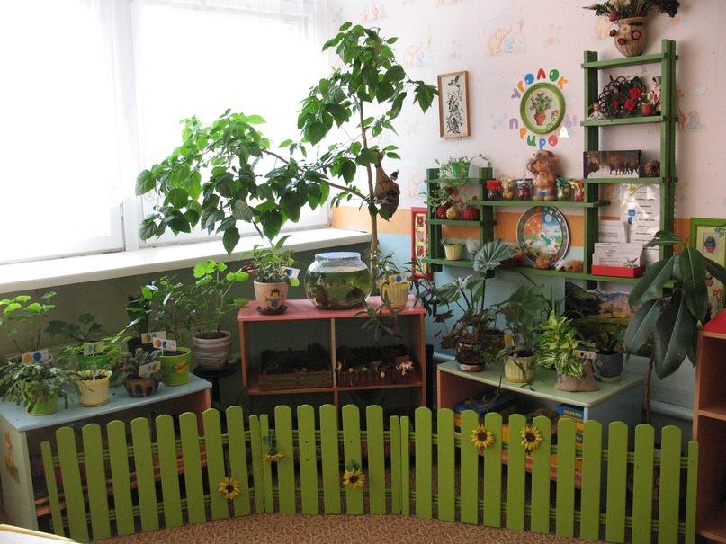 Оформление детского сада своими руками уголок природы 863