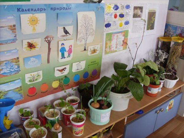 Уголок природы в детском саду: множество растений