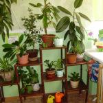 Уголок природы с растениями в горшках