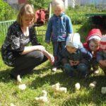 Дети и воспитатель рассматривают цыплят на траве