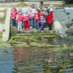 Группа детей рассматривает уток, плавающих в пруду