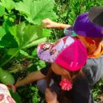 Дети в летней одежде рассматривают овощи на грядке