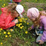 Две девочки присели на корточки на полянке с одуванчиками