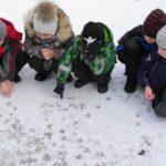 Пятеро детей рассматривают следы птиц на снегу