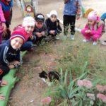 Группа детей смотрит на кошку