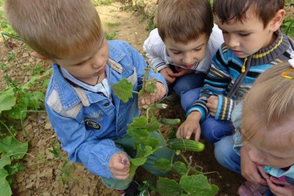 Четверо детей рассматривают выросший на участке огурец