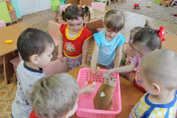 Дети играют с кроликом в помещении группы