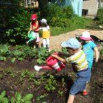 Дети поливают грядки с рассадой