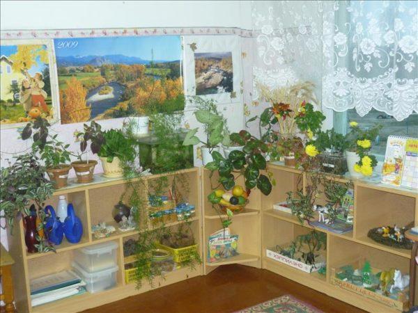 Экологический уголок с комнатными растениями на полках