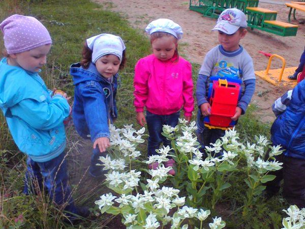 Дети наблюдают за весенними цветами на площадке