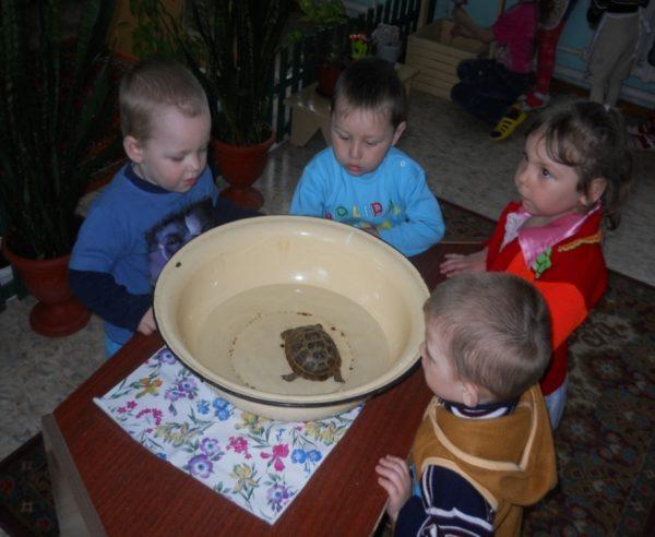 Четверо детей наблюдают за черепахой