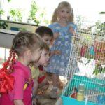 Дети наблюдают за попугайчиками в группе