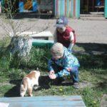 Дети рассматривают кошку