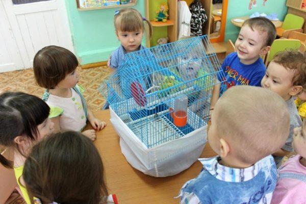 Дети стоят вокруг клетки с волнистым попугаем