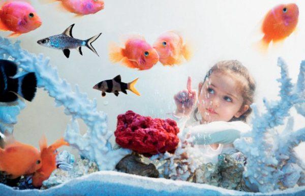 Девочка наблюдает за рыбками, плавающими в аквариуме