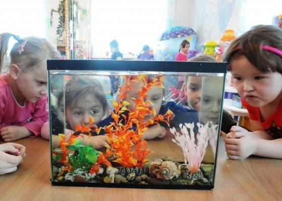 Дошкольники рассматривают аквариум