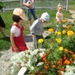 Наблюдение за цветущей клумбой