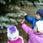 Дошкольники рассматривают и трогают ель