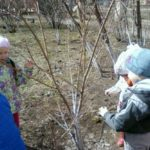 Дети наблюдают за набуханием почек весной