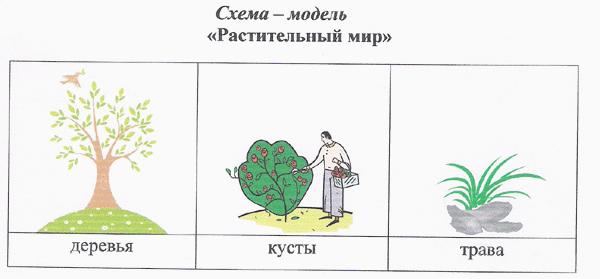 Схема сравнения деревьев, кустарников и трав