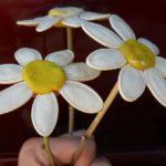 Три ромашки из тыквенных семечек и пластилина