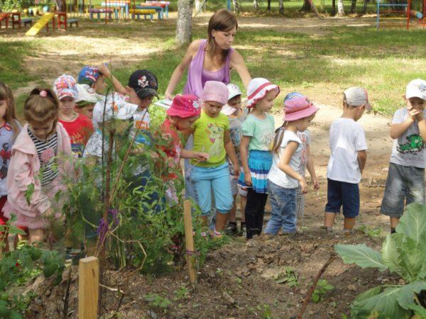 Воспитатель и дети стоят возле подвязанного кустарника