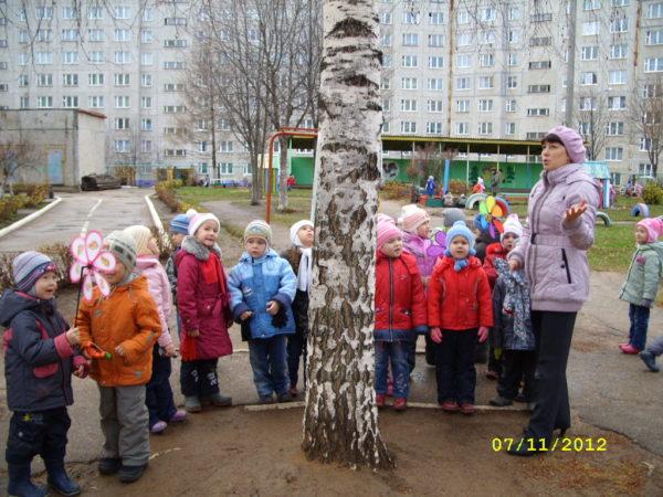Дети и воспитатель рассматривают берёзу