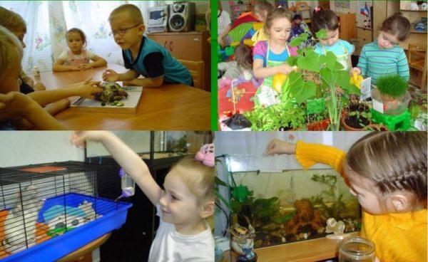 Четыре кадра: на первом дети рассматривают поделку, на втором — дети протирают листья цветов, на третьем — девочка кормит хомяка, на четвёртом — мальчик кормит рыбок