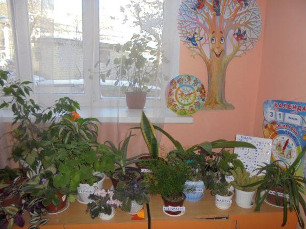 Цветы на столе под окном с ярлыками, на которых написаны названия