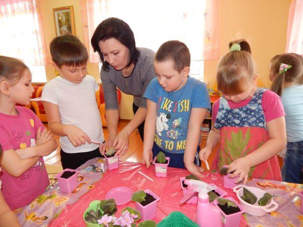 Дети и педагог рассаживают фиалки в горшочки
