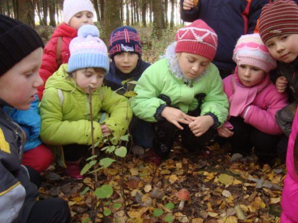 Дети рассматривают мухомор в парке
