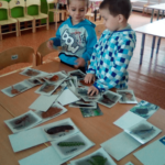Два мальчика стоят перед столом, на котором разложены карточки с изображениями животных