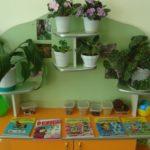 Экоцентр: оранжевый стол с книгами и коробочками с семенами, под ним шкафчик, по периметру стола — подставка под цветы