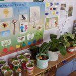 Эколуголок: на стене — плакаты, под ними — стол с цветами и мини-огородом