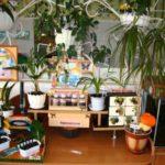 Эколуголок: передвижной столик с полочками, на которых цветы, наглядность, слева — аквариум,цветы на высоких стойках