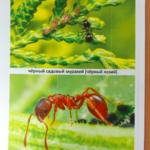 Картинки с изображениями муравьёв