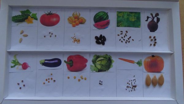Коллекция семян с картинками