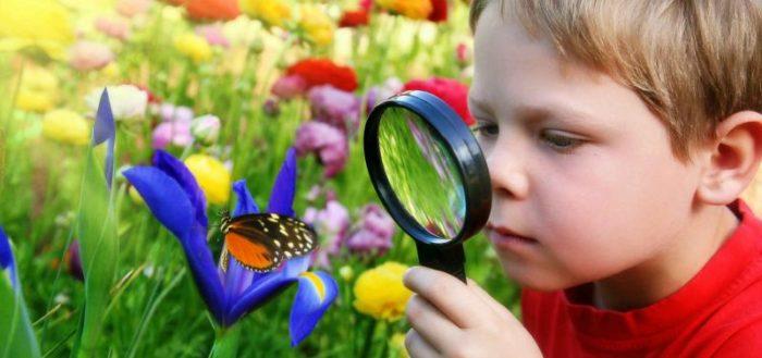 Мальчик через лупу смотрит на бабочку на синем цветке